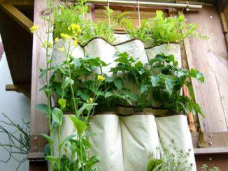 Rau sạch trồng trong vườn đứng tại nhà 10