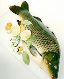 Dùng cá chữa xuất tinh sớm 6