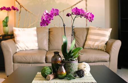 5 loại hoa mang nhiều ý nghĩa may mắn rực rỡ trong ngày Tết