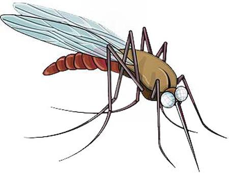 Cách phòng tránh và xử trí khi bị côn trùng tấn công 7